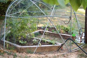 our raised bed garden cage